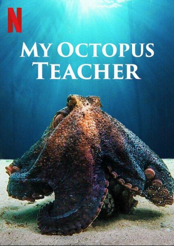 OctopusStory.jpeg