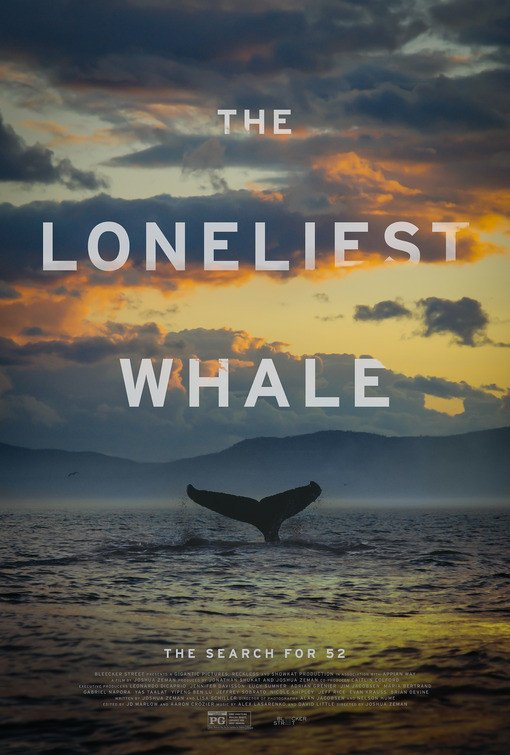 the loneliest whale.jpeg