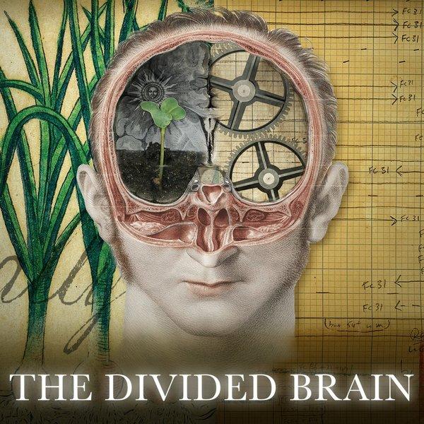divided brain.jpeg