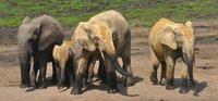 elephant path.jpg