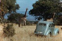 giraffes image.jpg